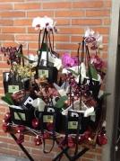 Orquídea Premium Ruiz de Ocenda